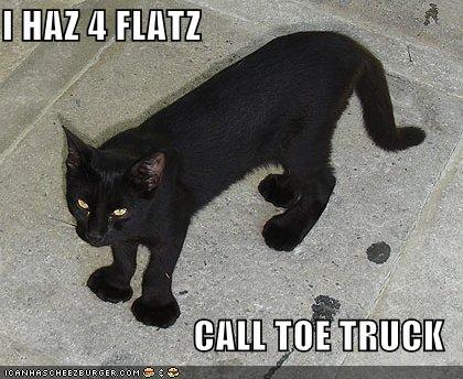 Cat Flat Feet
