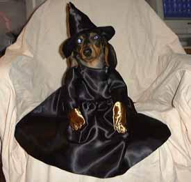 Halloween Wiener